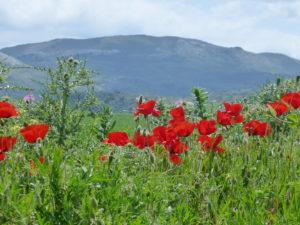 Von Gibraltar nach Santiago de Compostela @ Gibraltar - Santiago de Compostela