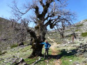 Durch die weißen Dörfer von Andalusien @ Malaga - Ronda