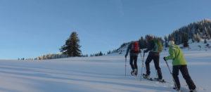 Schneeschuh - Tageswanderung @ Je nach Schnee- und Wetterlage. Vom Großraum Pfänderstock bis Bregenzerwald